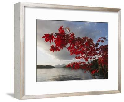 A Maple Tree in Fall Foliage Frames a View of Barnard Harbour-Richard Nowitz-Framed Photographic Print