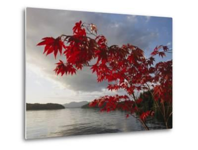 A Maple Tree in Fall Foliage Frames a View of Barnard Harbour-Richard Nowitz-Metal Print