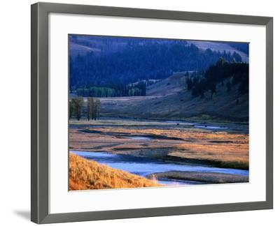 Lamar River Valley with Bison Crossing in Distance, Yellowstone National Park, U.S.A.-Christer Fredriksson-Framed Photographic Print
