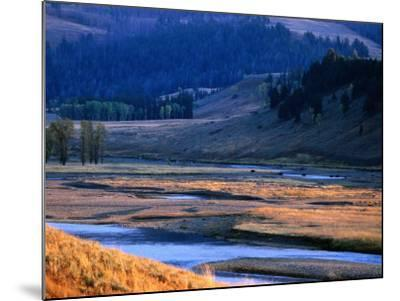 Lamar River Valley with Bison Crossing in Distance, Yellowstone National Park, U.S.A.-Christer Fredriksson-Mounted Photographic Print