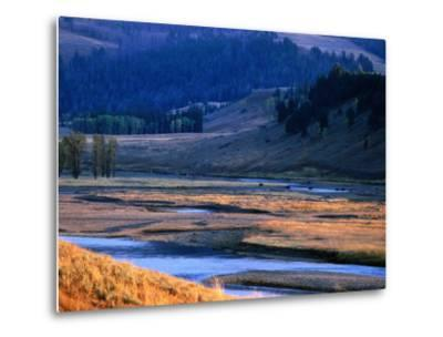 Lamar River Valley with Bison Crossing in Distance, Yellowstone National Park, U.S.A.-Christer Fredriksson-Metal Print