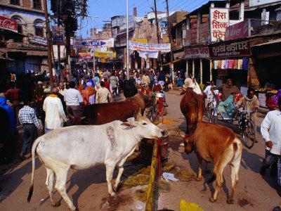 Human and Animal Traffic on Dasaswamedh Ghat Road, Varanasi, Uttar Pradesh, India-Richard I'Anson-Framed Photographic Print