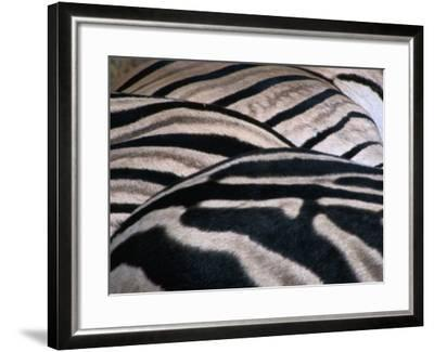 Detail of Burchell's Zebra Stripes, Kruger National Park, Mpumalanga, South Africa-Carol Polich-Framed Photographic Print