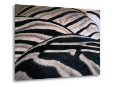 Detail of Burchell's Zebra Stripes, Kruger National Park, Mpumalanga, South Africa-Carol Polich-Metal Print