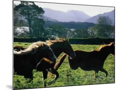 Three Horses Cantering Through Field, Ireland-Oliver Strewe-Mounted Photographic Print