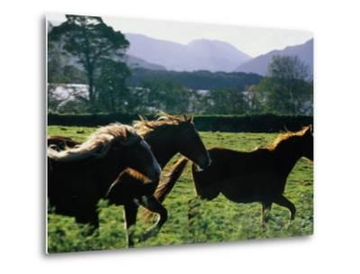 Three Horses Cantering Through Field, Ireland-Oliver Strewe-Metal Print
