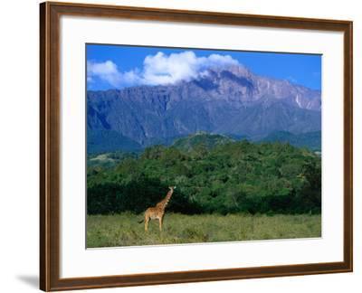 Lone Giraffe (Giraffa Camelopardalis) in Front of Mt