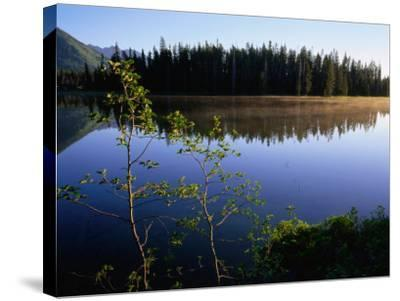 Trees Reflected in Lake Grand Teton National Park, Wyoming, USA-Rob Blakers-Stretched Canvas Print