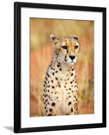 Sitting Cheetah at Africa Project, Namibia-Joe Restuccia III-Framed Photographic Print
