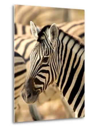 Zebra at Namutoni Resort, Namibia-Joe Restuccia III-Metal Print