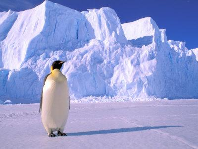 Emperor Penguins, Cape Darnley, Australian Antarctic Territory, Antarctica-Pete Oxford-Framed Photographic Print