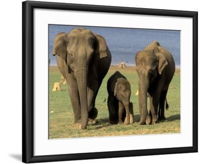 Asian Elephant Family, Nagarhole National Park, India-Gavriel Jecan-Framed Photographic Print