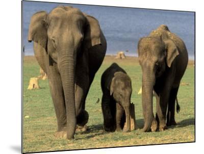 Asian Elephant Family, Nagarhole National Park, India-Gavriel Jecan-Mounted Photographic Print