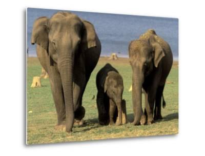 Asian Elephant Family, Nagarhole National Park, India-Gavriel Jecan-Metal Print