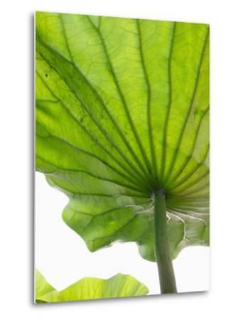 Lotus Leaf Texture-Michele Molinari-Metal Print