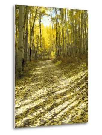 Aspen, Dirt Road, Kebler Pass, Colorado, USA-Darrell Gulin-Metal Print