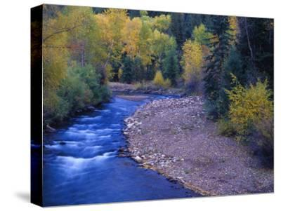 San Miguel River and Aspens in Autumn, Colorado, USA-Julie Eggers-Stretched Canvas Print