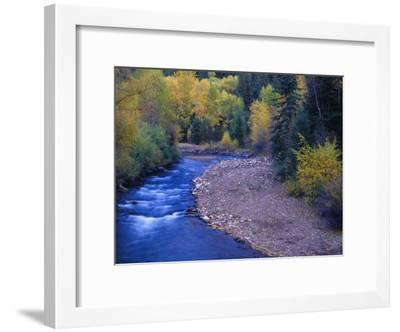 San Miguel River and Aspens in Autumn, Colorado, USA-Julie Eggers-Framed Premium Photographic Print