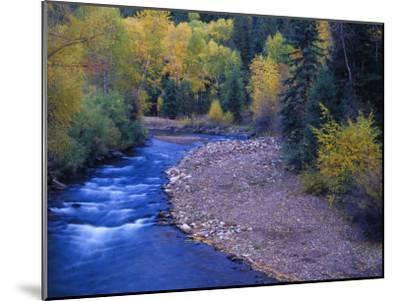 San Miguel River and Aspens in Autumn, Colorado, USA-Julie Eggers-Mounted Premium Photographic Print