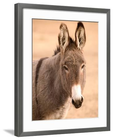 Philmont Scout Ranch Museum Burro, Cimarron, New Mexico, USA-Walter Bibikow-Framed Photographic Print