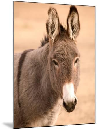 Philmont Scout Ranch Museum Burro, Cimarron, New Mexico, USA-Walter Bibikow-Mounted Photographic Print