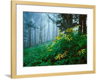 Golden-Glow Flowers, Great Smoky Mountains National Park, North Carolina, USA-Adam Jones-Framed Photographic Print