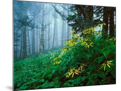 Golden-Glow Flowers, Great Smoky Mountains National Park, North Carolina, USA-Adam Jones-Mounted Photographic Print