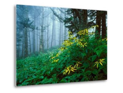 Golden-Glow Flowers, Great Smoky Mountains National Park, North Carolina, USA-Adam Jones-Metal Print