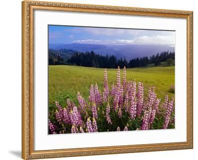 Blue-Pod Lupine in Bloom, Oregon, USA-Adam Jones-Framed Photographic Print