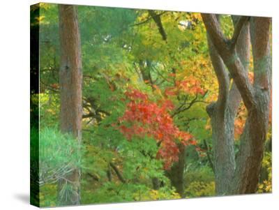 Okochi Sanso, Kyoto, Japan-Rob Tilley-Stretched Canvas Print