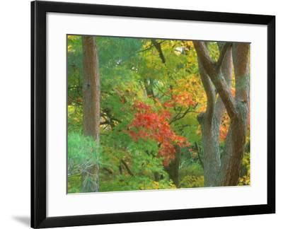Okochi Sanso, Kyoto, Japan-Rob Tilley-Framed Photographic Print