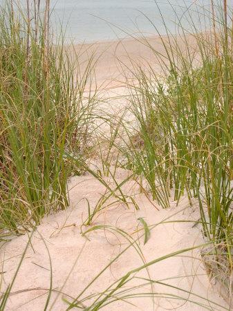 Smyrna Dunes Park, New Smyrna Beach, Florida-Lisa S^ Engelbrecht-Framed Photographic Print