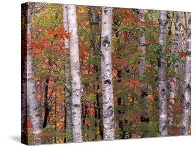 Forest Landscape and Fall Colors, North Shore, Minnesota, USA-Gavriel Jecan-Stretched Canvas Print