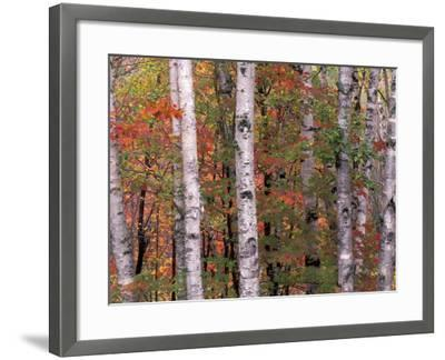 Forest Landscape and Fall Colors, North Shore, Minnesota, USA-Gavriel Jecan-Framed Photographic Print
