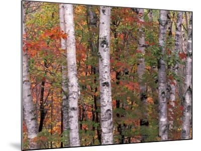 Forest Landscape and Fall Colors, North Shore, Minnesota, USA-Gavriel Jecan-Mounted Photographic Print