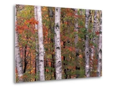 Forest Landscape and Fall Colors, North Shore, Minnesota, USA-Gavriel Jecan-Metal Print