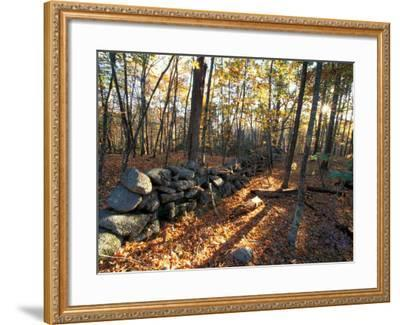 Stone Wall, Nature Conservancy Land Along Crommett Creek, New Hampshire, USA-Jerry & Marcy Monkman-Framed Photographic Print