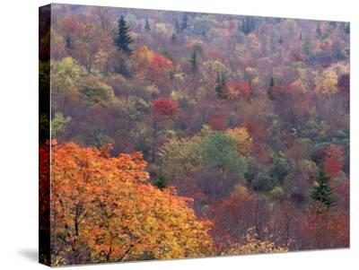 Autumn color in the Great Smoky Mountains National Park, Tennessee, USA-William Sutton-Stretched Canvas Print