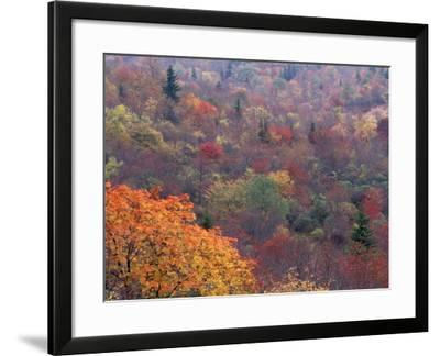 Autumn color in the Great Smoky Mountains National Park, Tennessee, USA-William Sutton-Framed Photographic Print