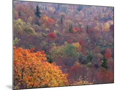 Autumn color in the Great Smoky Mountains National Park, Tennessee, USA-William Sutton-Mounted Photographic Print