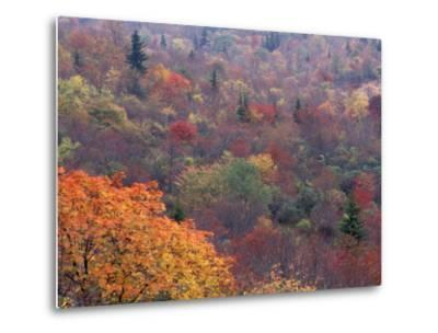 Autumn color in the Great Smoky Mountains National Park, Tennessee, USA-William Sutton-Metal Print