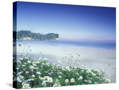 Daisies along Crescent Beach, Olympic National Park, Washington, USA-Adam Jones-Stretched Canvas Print