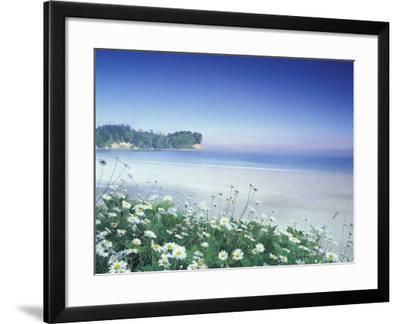 Daisies along Crescent Beach, Olympic National Park, Washington, USA-Adam Jones-Framed Photographic Print