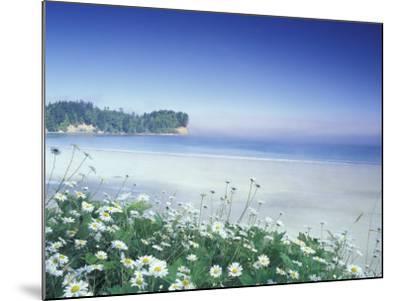 Daisies along Crescent Beach, Olympic National Park, Washington, USA-Adam Jones-Mounted Photographic Print