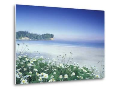 Daisies along Crescent Beach, Olympic National Park, Washington, USA-Adam Jones-Metal Print