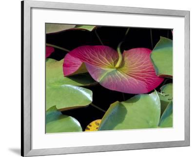 Lily Pads, Washington, USA-Terry Eggers-Framed Photographic Print
