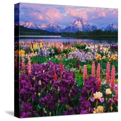 Iris and Lupine Garden and Teton Range at Oxbow Bend, Wyoming, USA-Adam Jones-Stretched Canvas Print