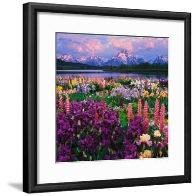 Iris and Lupine Garden and Teton Range at Oxbow Bend, Wyoming, USA-Adam Jones-Framed Photographic Print