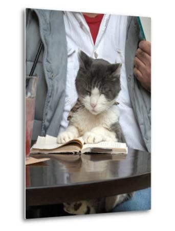 A Cat Joins its Owner Reading a Book at a Tokyo Cafe--Metal Print