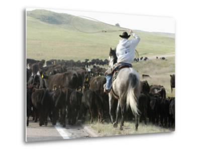 A Cow Hand Drives Cattle--Metal Print